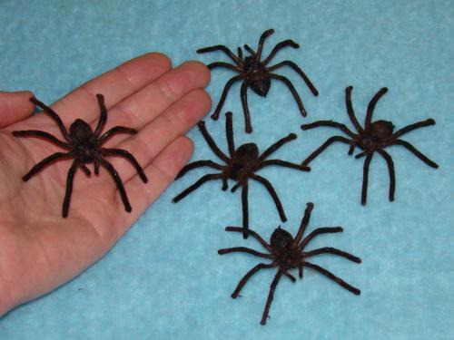 Čarodějnice - Tarantule velká